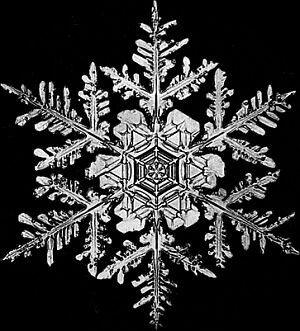 snowflake_10-12-071